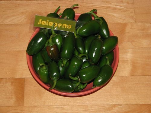 Jalapeno Early