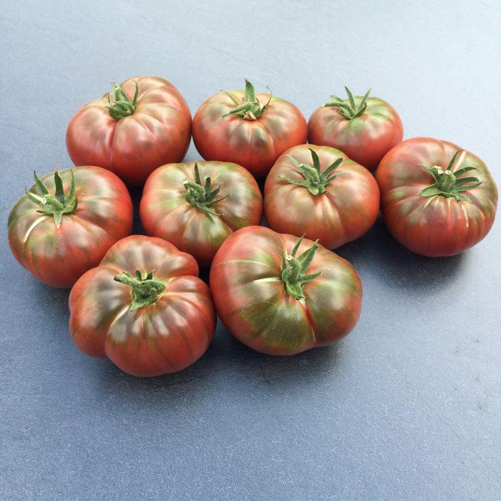 10 Samen alte Indianer-Tomate Cherokee Purple