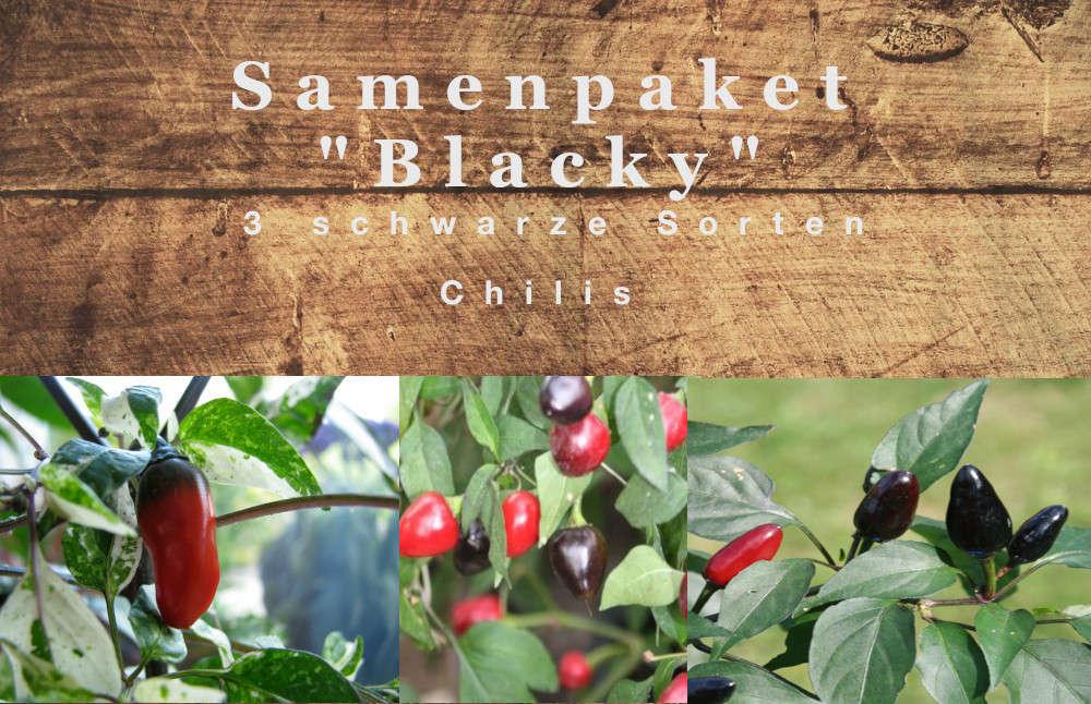 Black Olive schwarze Chilli scharfe Chili sehr dekorativ