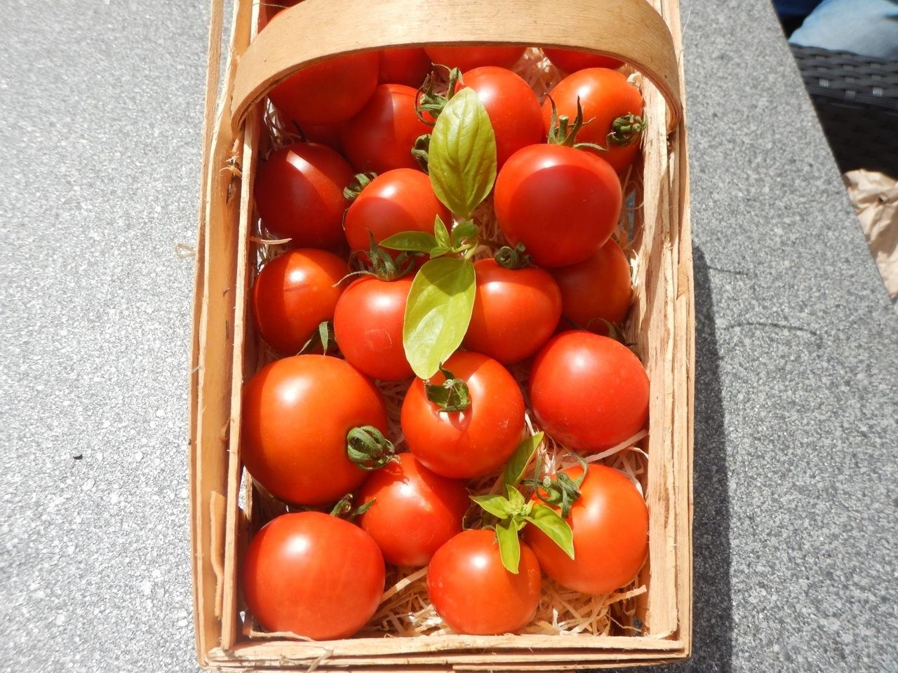 harbinger rote tomate alte englische sorte mit weicher schale. Black Bedroom Furniture Sets. Home Design Ideas