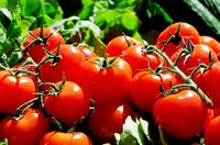 Rote Runde Tomaten