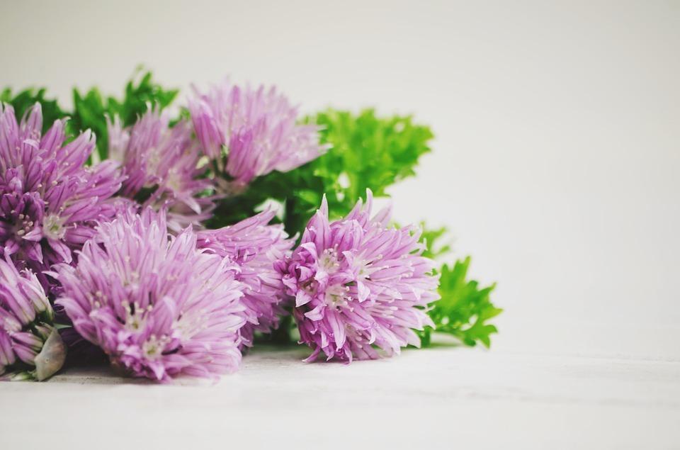 Japanischer Lauch für Sushi Allium ledebourianum Asatsuki Altai Schnittlauch